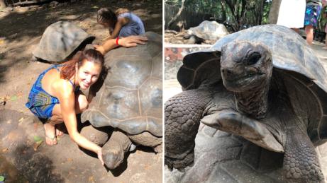 Obrovské želvy naZanzibaru můžete krmit, hladit nebo drbat nahlavě. Jsou kouzelné