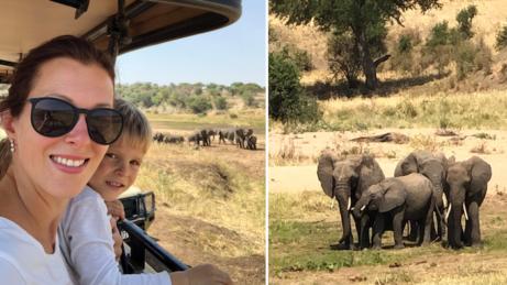 Tanzánie. 1. den našeho safari vparku Tarangite. Obrovská stáda slonů.